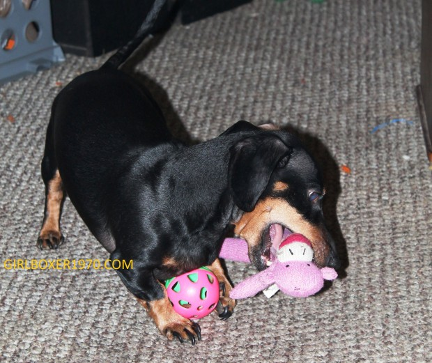 Voggie takes down the monkey while remaining in control of his ball