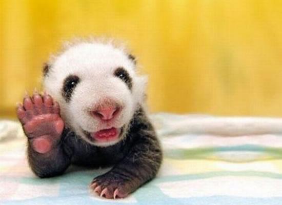 I hope to grow opposing thumbs. Go Darwin
